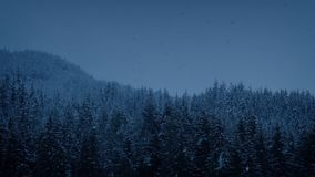 Snowfall In Mountain Forest At Dusk. Snowing in the mountains late in the day