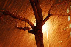 Snowing night Stock Photography