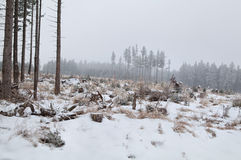 Snowing over meadow in coniferous forest Royalty Free Stock Image