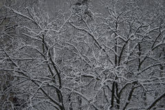 Snowing over the trees Royalty Free Stock Photo