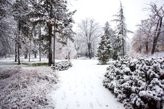 Snowing in park City of Novi Sad Stock Image