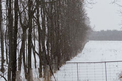 Snowing on a pasture field and trees along the edge of it. Background image of deciduous trees with no leaves in winter along the fenceline of a field, with snow Stock Photos