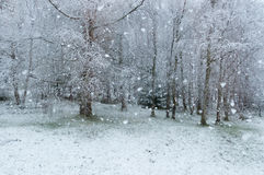 Snowing. Snow falling on ground in the forest Royalty Free Stock Photography