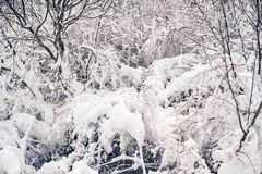Snowing storm in Tirana in january 2017. Snow covered all the trees and branches in Tirana countryside close to Dajti Natinal Park in January 2017 Royalty Free Stock Images