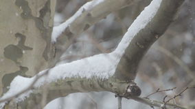 Snowing on a tree branch stock video footage