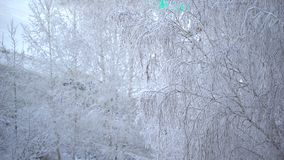 Close up of frosty tree`s branch after heavy snowfall. Background tree in frost in winter, road, bus. snowing on tree. Snowing on tree branches. Close up of stock footage