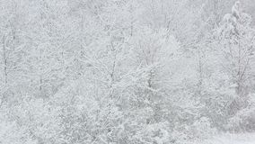 Snowing on tree branches stock footage