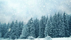 Snowing on trees. Winter in mountains stock video