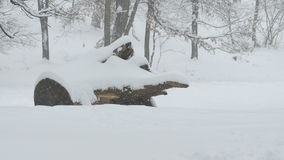 Snowing Trunk and Forest stock footage