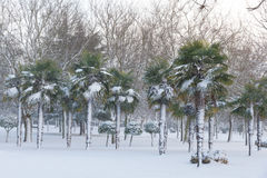 Snowing in Urban Public Park With Palm Trees Stock Images