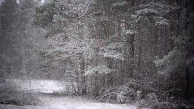 Snowing w lesie, zwolnione tempo zbiory