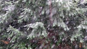 Snowing w lesie w zwolnionym tempie zdjęcie wideo