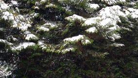 Snowing w zwolnionym tempie zbiory