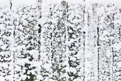 Snowing wall Stock Photo