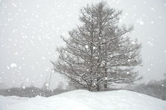 Snowing in the winter. With a tree stock photo