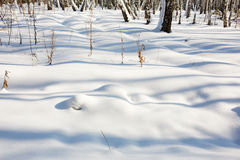 Snowing winter background. Royalty Free Stock Photo