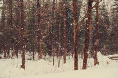 Snowing in a Winter Forest - Vintage Royalty Free Stock Photos