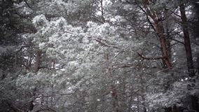 Snowing, zwolnione tempo