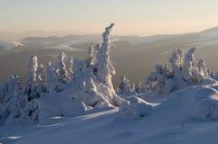 Snowkungarike Arkivbilder