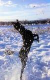Snowlab Photos stock