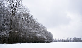 Snowland Photo stock