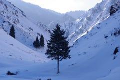 Snowland de Xinjiang Fotos de archivo