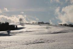 Snowland und der Baum in Slowakei lizenzfreie stockfotos