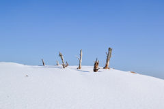 Snowlandscape in the winter. Stock Photography