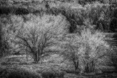 Snowless December  BW Royalty Free Stock Photography