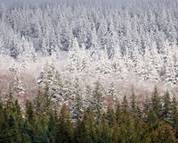 Snowline Royalty Free Stock Images