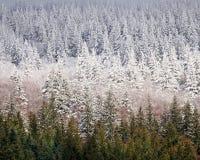 snowline Royaltyfria Bilder