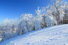 Snowmade Trees Royalty Free Stock Image