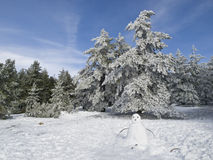 Snowman. Winter scene with a snowman in the foreground Royalty Free Stock Images