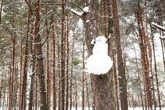 Snowman hanging on a tree branch in the woods, Royalty Free Stock Photography