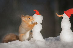 Snowman kiss. Red squirrel holding  a snowman Royalty Free Stock Photography