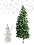 Snowman and pine Stock Images