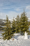 Snowman and spruces in mountains Stock Photo
