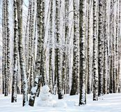 Snowman in winter birch forest Stock Photography