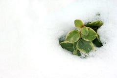 Snowmelt Photos stock
