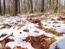 Hojas del invierno foto de archivo libre de regalías