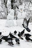 Snowmen couple in the winter forest. Made by hand. A flock of pigeons pecking grain in the snow stock photos