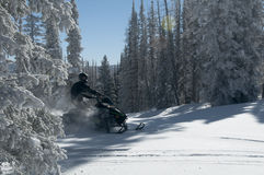 Snowmobile riding coming between trees creating powder Stock Images