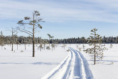 Snowmobile track in the swamp Royalty Free Stock Photos
