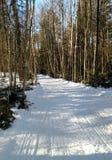 Snowmobile trail Royalty Free Stock Photo