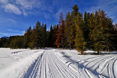 Snowmobile Trail along Greys River, Wyoming Royalty Free Stock Images