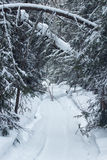 Snowmobile trail through a forest. Snowmobile trail through a green forest Stock Photos