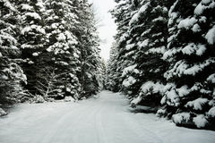 Snowmobile Trail Stock Photography
