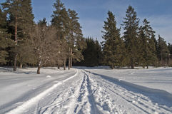 Snowmobile trail in winter forest Stock Images