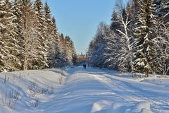 Snowmobile trails through the woods Stock Image
