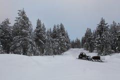 Snowmobile w Lapland jedlinowych drzewach lasowych fotografia stock